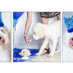 sRochon817_Collage1_R